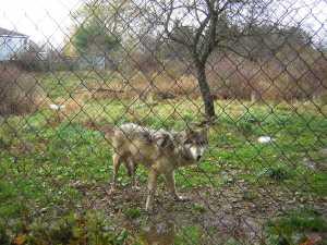 Nina wolf
